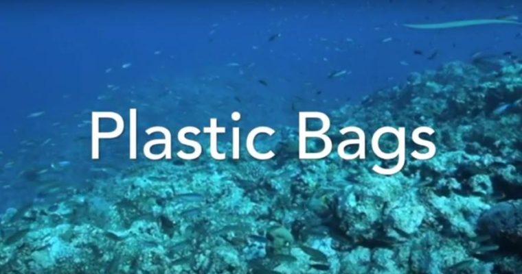 #CMINFORMA – Buste della spesa biodegradabili: lo sono davvero?